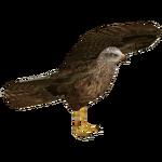 Black Kite (Bahia46)