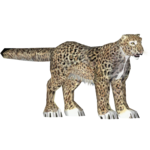 African Leopard (Mad Head)