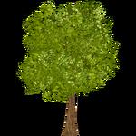 Khejri Tree (The Restorers)