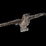 Eurasian Eagle Owl (ZTABC Team)
