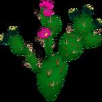 Beavertail Cactus (Mika & Penguinman)