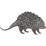 Brazilian Porcupine (HENDRIX & Zerosvalmont)