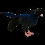 Alagoas Curassow (Whalebite)