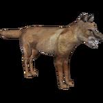 Corsac Fox (DutchDesigns)