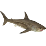 Great White Shark (Zerosvalmont)