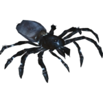 African Black Trapdoor Spider (Terrena Laxamentum)