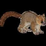 Berthe's Mouse Lemur (Raulfpv)