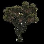 Joshua Tree (Nessich)