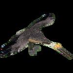 Brown Pelican (DutchDesigns)
