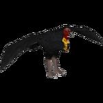 Australian Brush Turkey (Mysty)