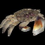 Ambient Fiddler Crab (Whalebite)