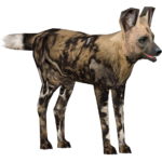 African Wild Dog (Demon Hunter)