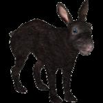 Amami Rabbit (Tamara Henson)