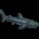 Basking Shark (Zerosvalmont)/Version 2