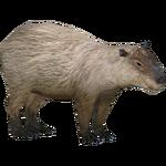 Capybara (Braq, Triceraptor Rex & Xtremepieman)