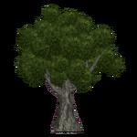 California Oak (Aurora Designs)