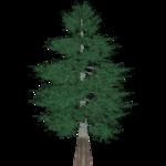 Bald Cypress (Demon Hunter)