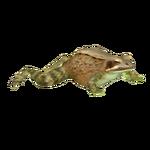 Common Frog (Ulquiorra)