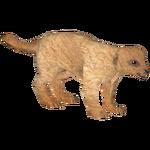 Black-Tailed Prairie Dog (Mika & Penguinman)
