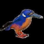 Azure Kingfisher (Nessich)