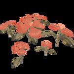 Batavian Giant Flower (Panrex)