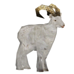 Dall Sheep (Super Designers United)