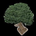 Water Oak (Z-Studio)