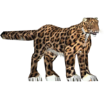 African Leopard (Mad Head)/Version 1