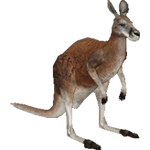 Red Kangaroo (Aurora Designs)