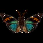 Ambient Turquoise Emperor (Hispanium)