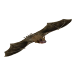 Big Brown Bat (Batty)