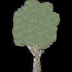 Eucalyptus (Hispa Designs)