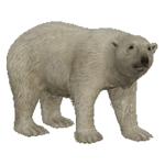Polar Bear (Aurora Designs)