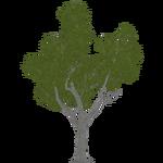 Box Elder (Aurora Designs)
