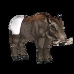 Baby Warthog (BRR)
