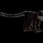 Black Crested Mangabey (DutchDesigns)