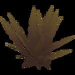 Basket Fern (Artifex)