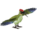 European Green Woodpecker (Tamara Henson)