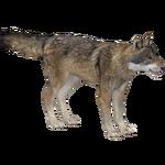 Eurasian Wolf (Ulquiorra)