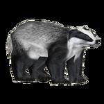 European Badger (ShenTirag & SilesianTomcat)