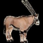 Beisa Oryx (Tamara Henson)