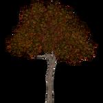 Coral Tree (Hispa Designs)