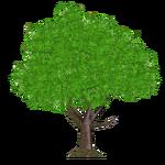 Nightcap Oak Tree (Tamara Henson)