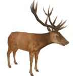 Red Deer (HENDRIX)/Version 1