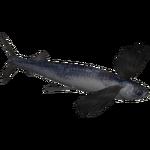 Atlantic Flyingfish (Whalebite)