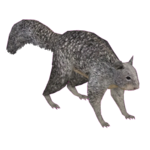 California Ground Squirrel (Jeremiah)