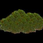 Antarctic Pearlwort (Zeta-Designs)