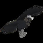 Black Vulture (Dedennedillo)/Version 1