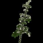 Bamboo (Zerosvalmont)