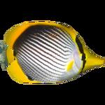 Black-backed Butterflyfish (Dycki1231)